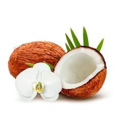Coconut with leaves and white flower vector image