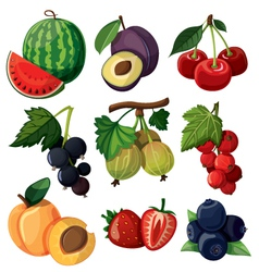Set of isolated berries vector image vector image