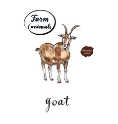 brown goat vector image
