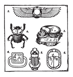 Egyptian scarabs as a symbol vintage engraving vector