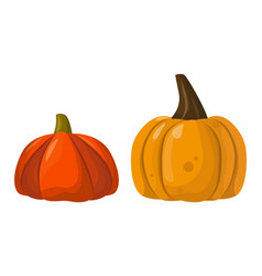 fresh orange pumpkin vegetable isolated vector image