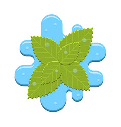 Mint in water vector