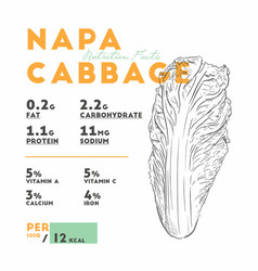 nutrition facts of napa cabbage hand draw sketch vector image