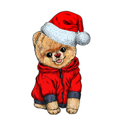 pomeranian toy dig dressed in santa hat vector image