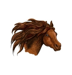 Running horse head close up portrait vector image