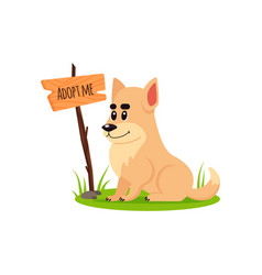 Sitting homeless dog with a poster adopt me dont vector