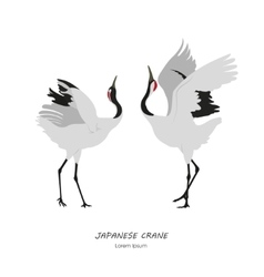 Two Japanese Cranes dancing on a white background vector image