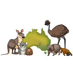 Wild animals in Australia vector