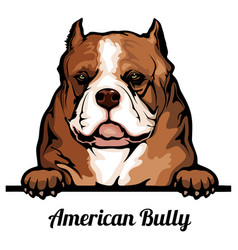 head american bully - dog breed color image vector image