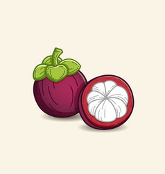 Mangosteen vector