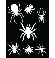 white spider vector image vector image