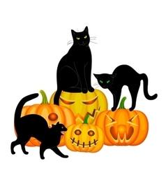 Cats and pumpkin vector image