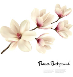 Flower background with blossom branch of white vector image vector image