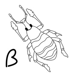 beetle bug coloring vector image