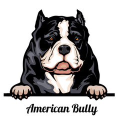 Head american bully - dog breed color image vector