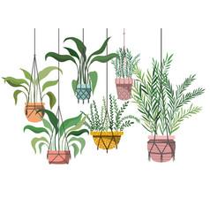 Houseplants on macrame hangers icon vector