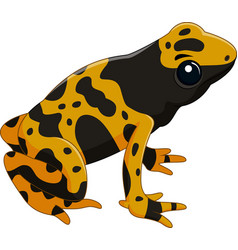 Poison dart frog isolated on white background vector