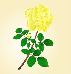 Twig yellow rose stem with leaves and bud vector