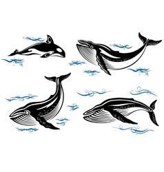 Cartoon sea whales vector image vector image