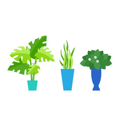 indoor plants in pots cafe interior floral decor vector image