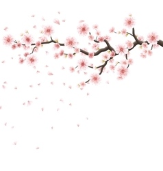 Pink sakura flowers isolated on white EPS 10 vector