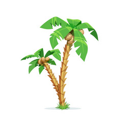 two tropical palm with coconut vector image