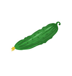 cucumber icon isolated vector image