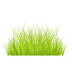 Green grass border for summer landscape vector