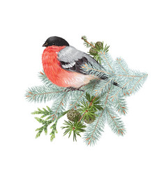 Bullfinch winter composition vector