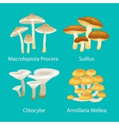 different type mushrooms for food set isolated vector image