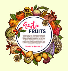 exotic fruits and tropical berries frame vector image