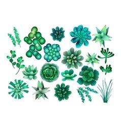 Watercolor green succulent vector