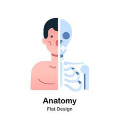 Anatomy flat vector