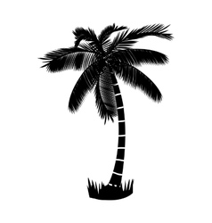 Summer palm tree vector