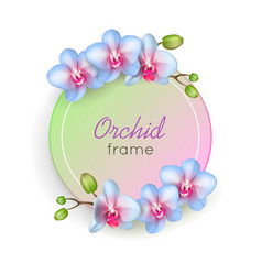 orchid round frame isolated vector image