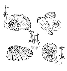 Sea Shell and Snail Collection vector image vector image