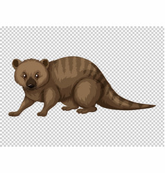 Australian wild animal on transparent background vector