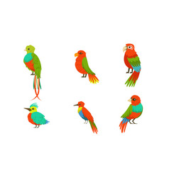 different birds with bright colorful plumage vector image