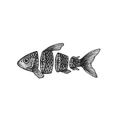dotwork sliced fish vector image