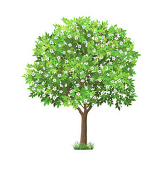 Realistic blooming tree vector