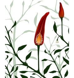 Botanical Red Chilli Pepper Section Plant vector
