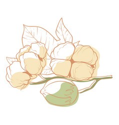 cotton flower icon flower and nature decoration vector image