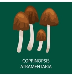 Group of common ink caps poisonous mushroom vector