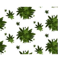 medical cannabis or marijuana leaves background vector image
