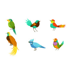 set with different birds with bright colorful vector image