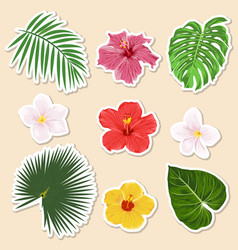 different tropical plants - flowers and vector image
