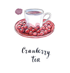 cranberry tea in a white cup vector image vector image