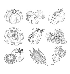 Fruit and Vegetables Handdrawn vector
