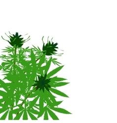 Green bush of hemp vector