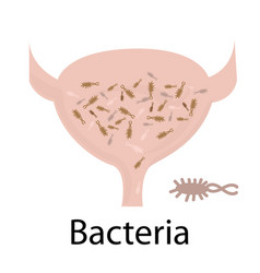 Urinary tract infection bacteria vector